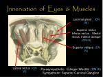 innervation of eyes muscles