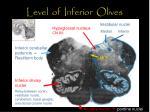 level of inferior olives