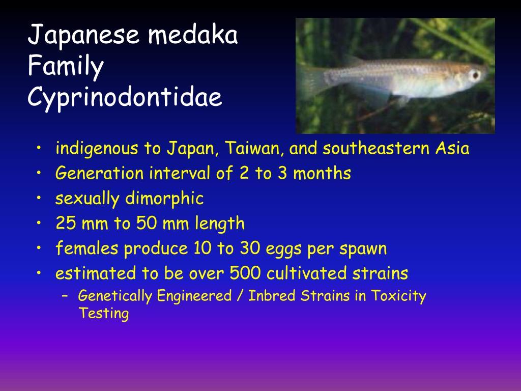 Japanese medaka