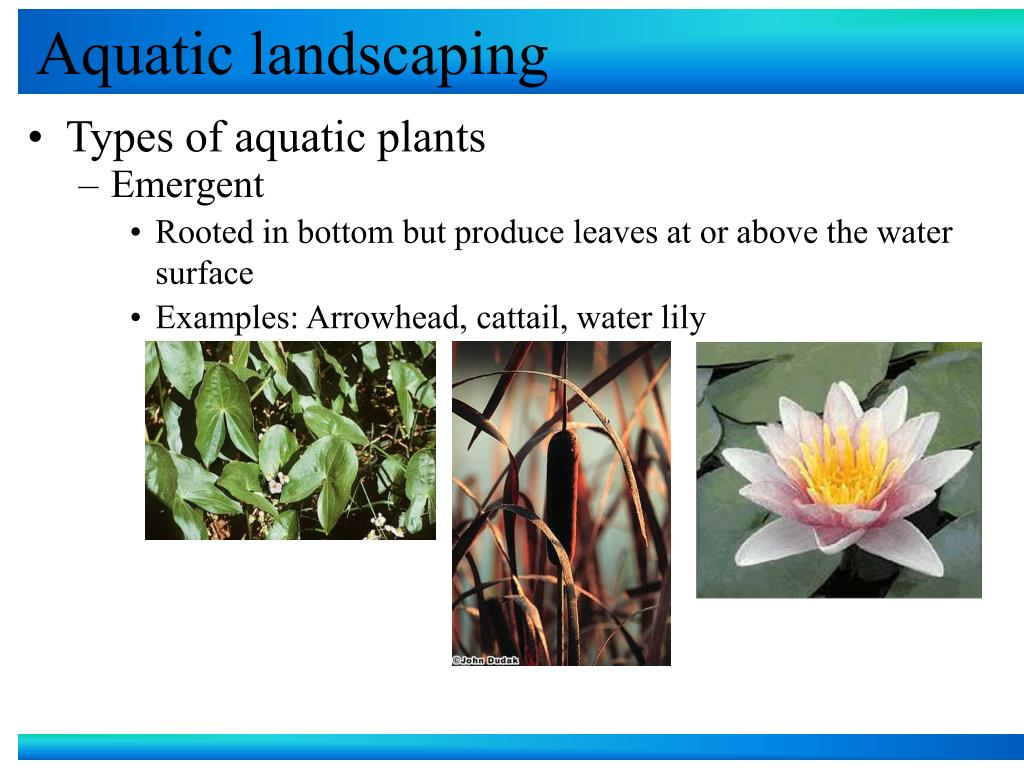 Aquatic landscaping
