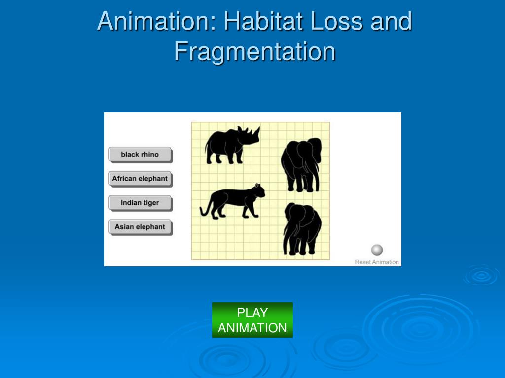 Animation: Habitat Loss and Fragmentation