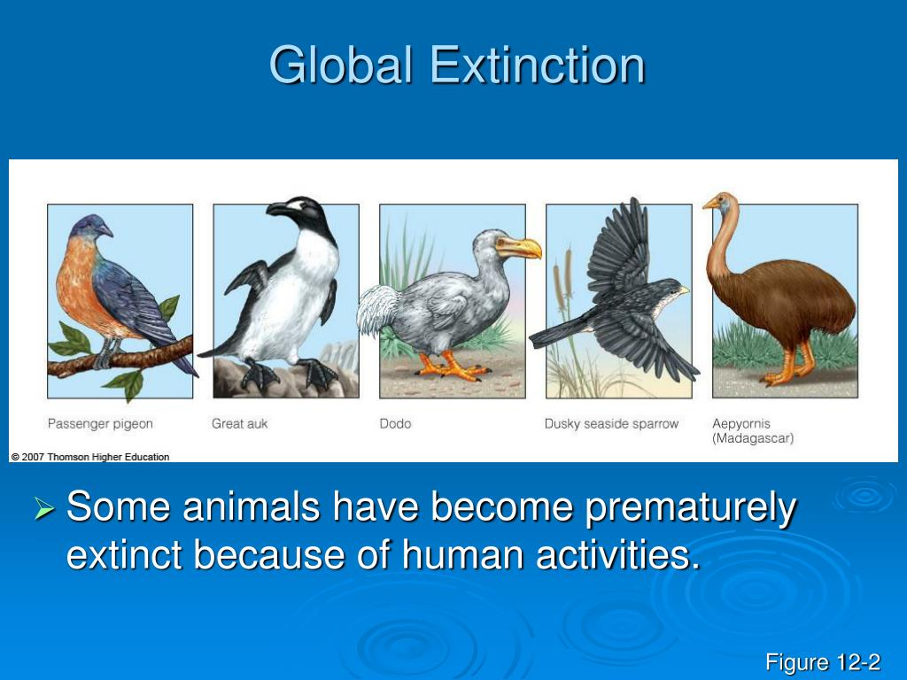 Global Extinction