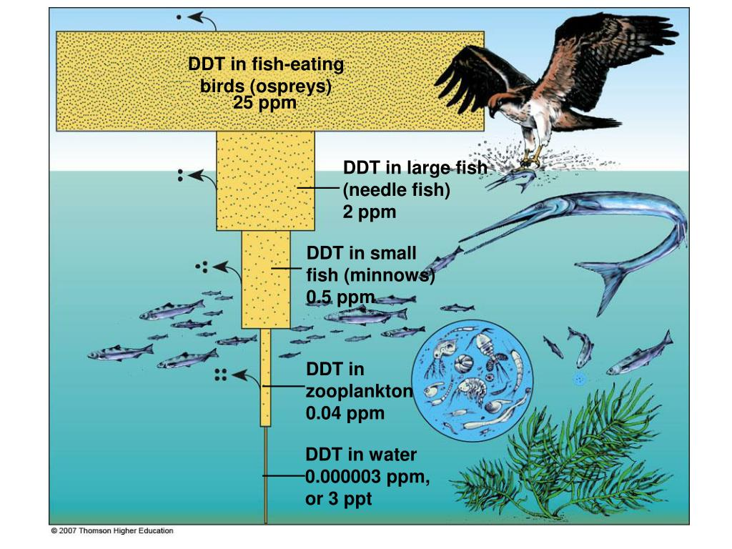 DDT in fish-eating birds (ospreys)