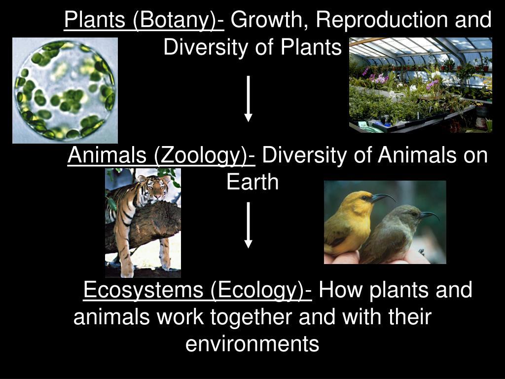 Plants (Botany)-
