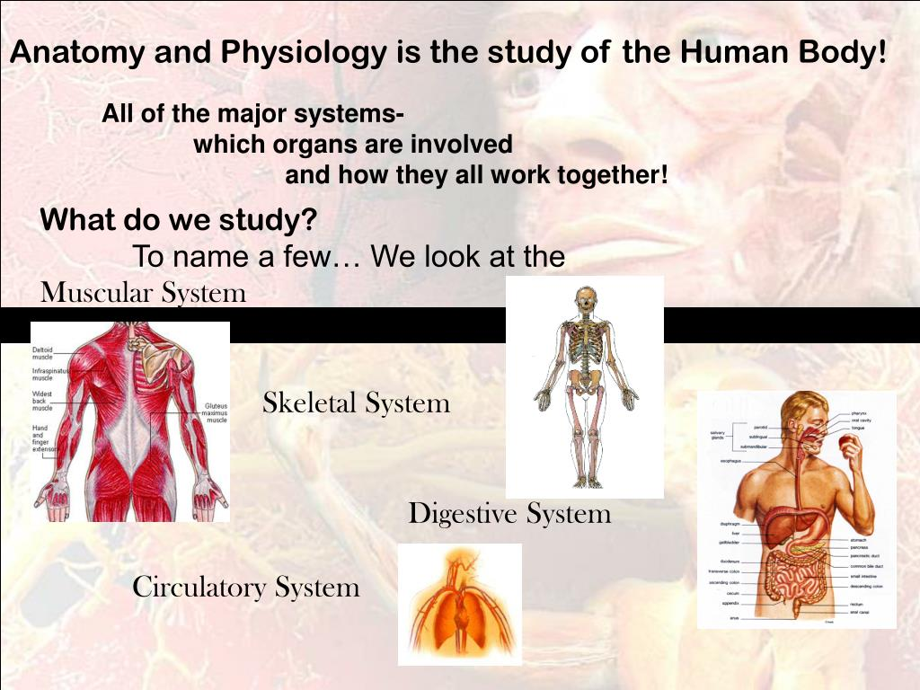 Anatomy and Physiology is the study of the Human Body!