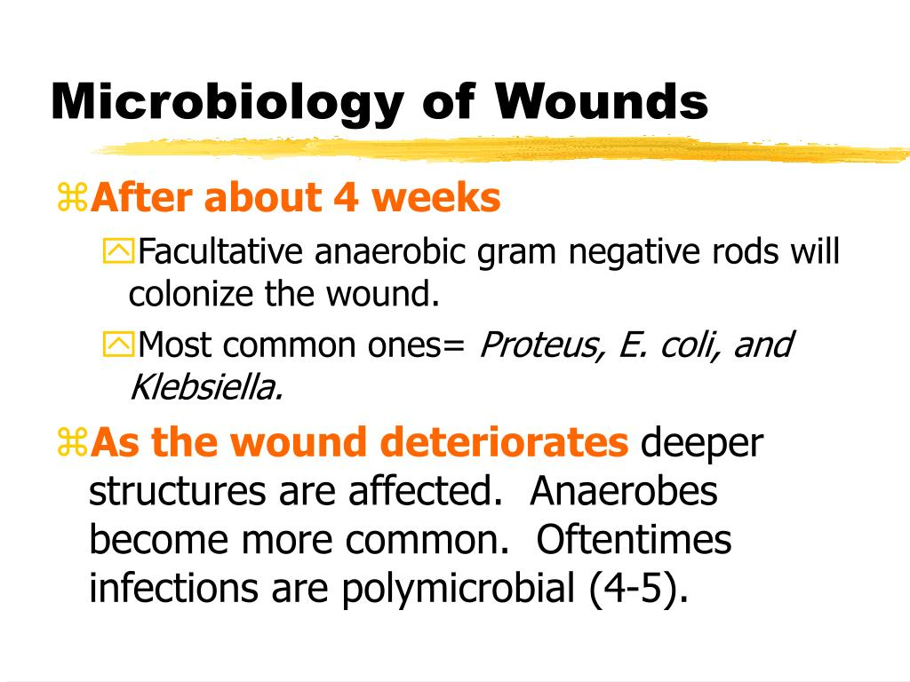 Microbiology of Wounds