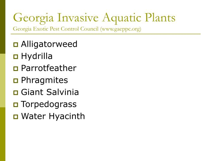 Georgia invasive aquatic plants georgia exotic pest control council www gaeppc org