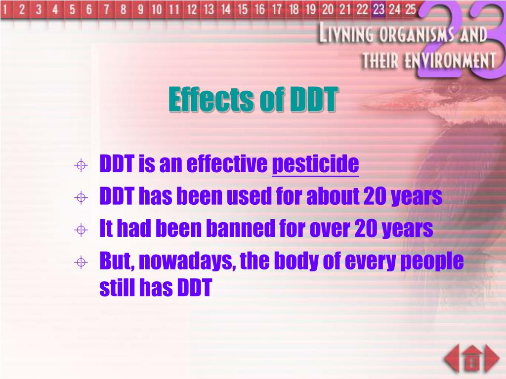 Effects of DDT
