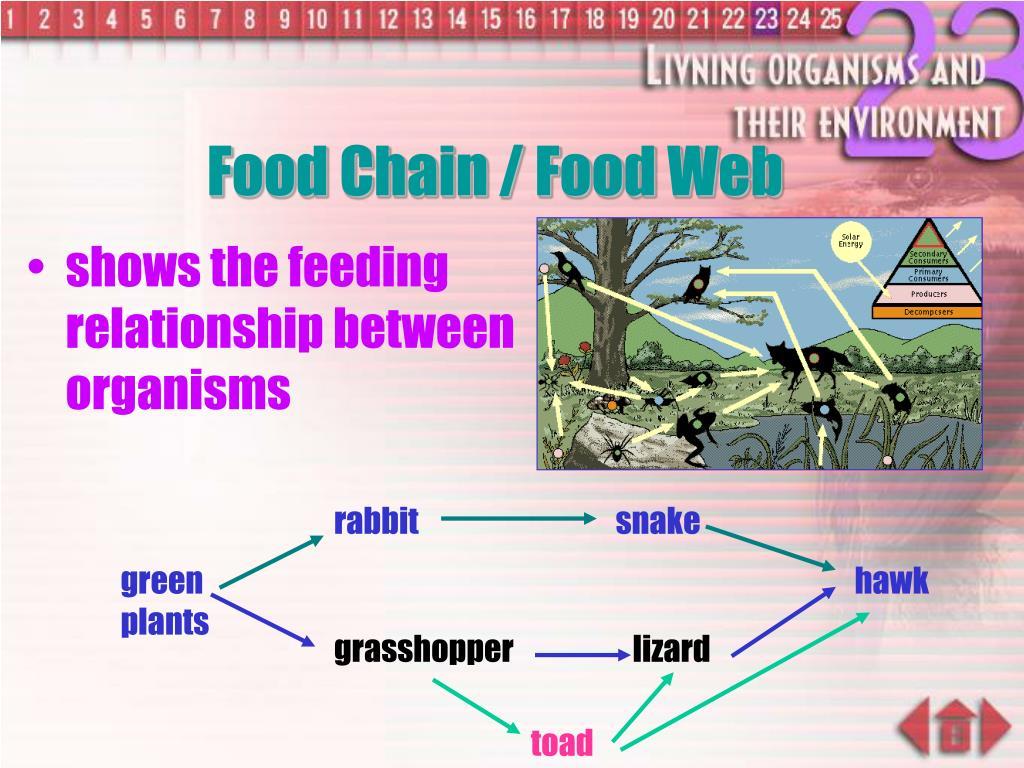Food Chain / Food Web