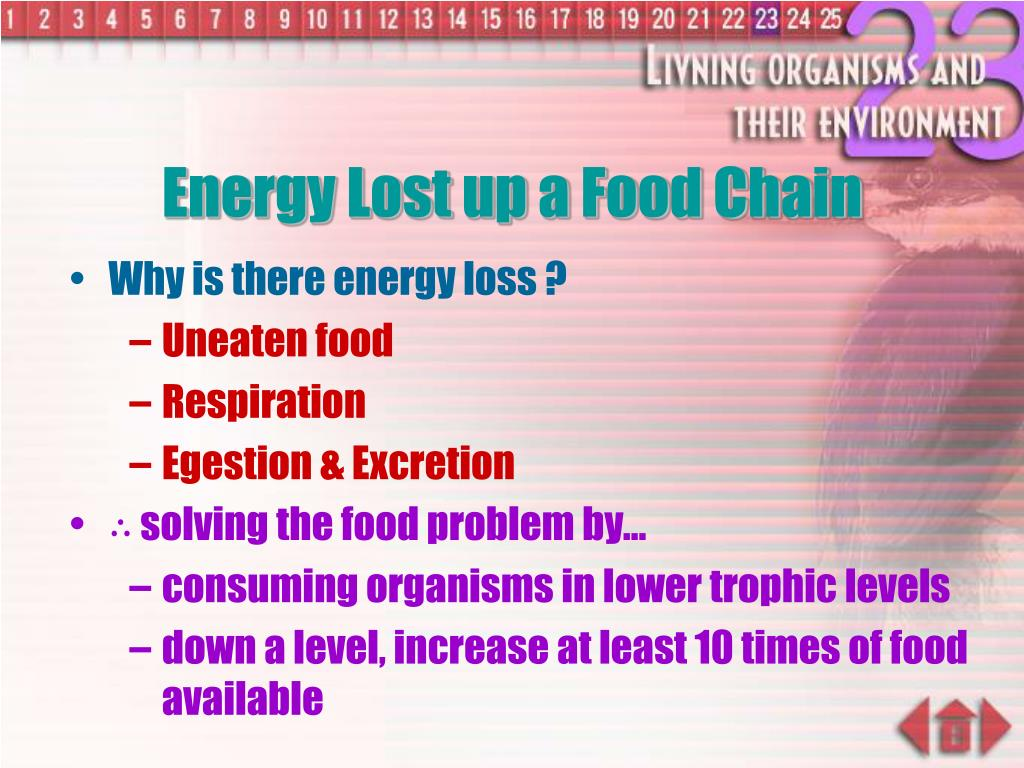 Energy Lost up a Food Chain