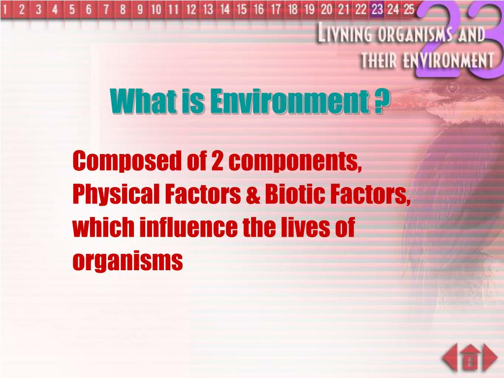 What is Environment ?