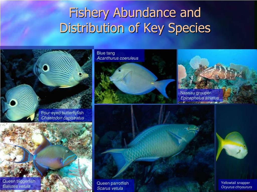 Fishery Abundance