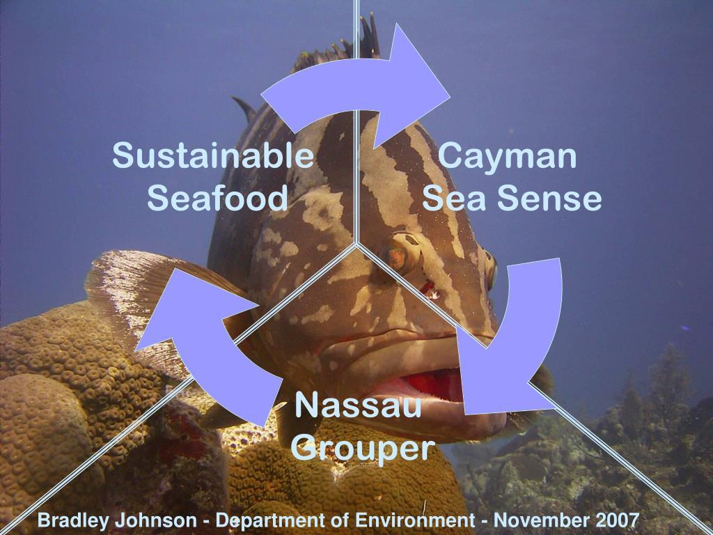 Bradley Johnson - Department of Environment - November 2007