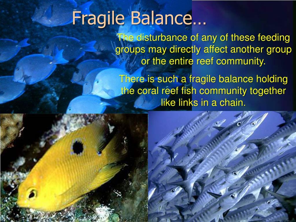 Fragile Balance…
