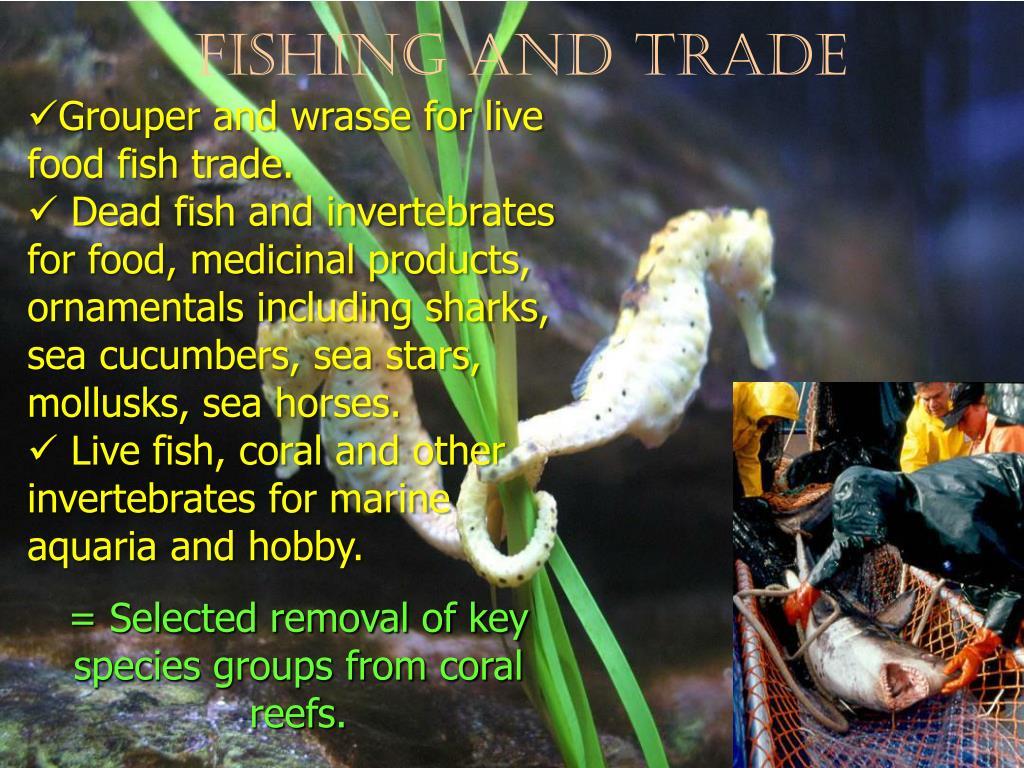 Fishing and Trade