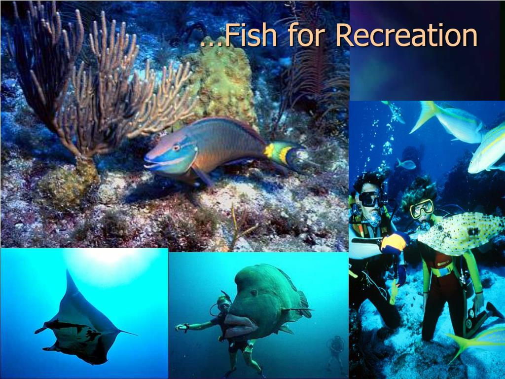 …Fish for Recreation