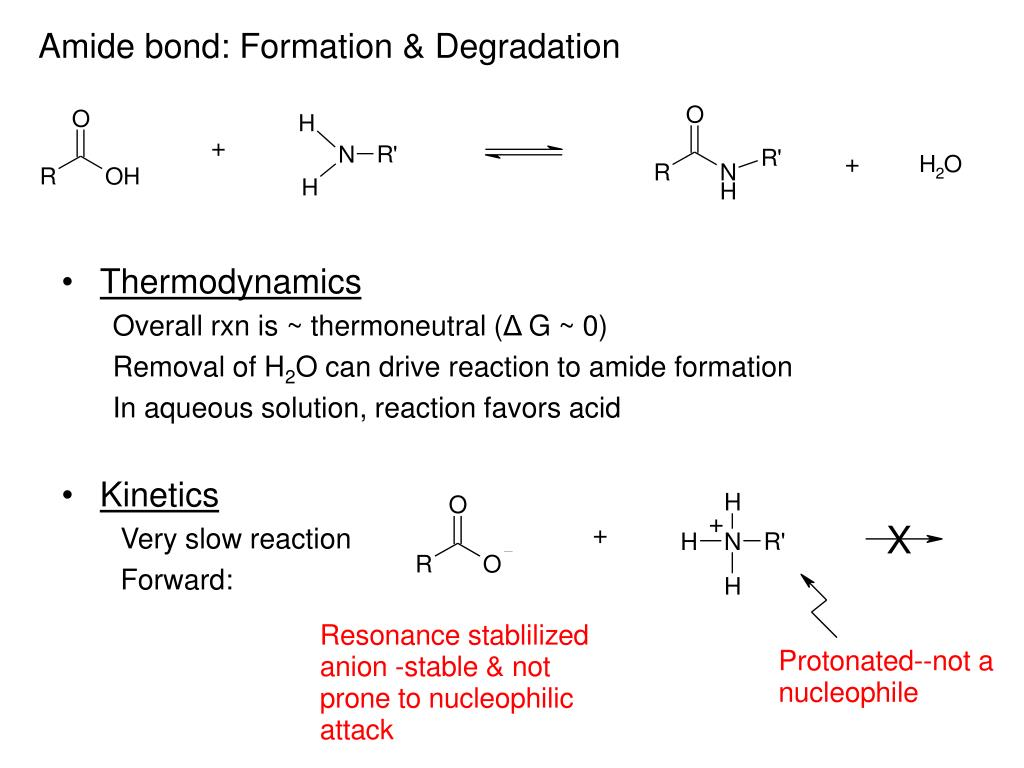 Amide bond: Formation & Degradation