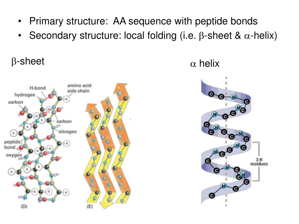 Primary structure:  AA sequence with peptide bonds