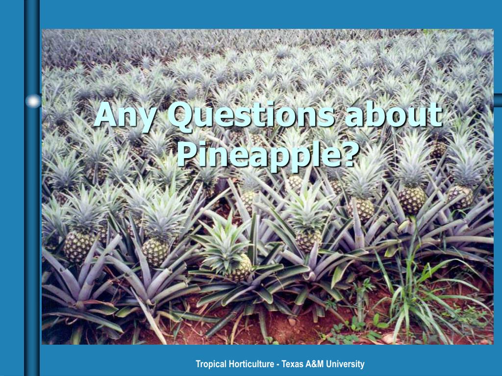 Any Questions about Pineapple?