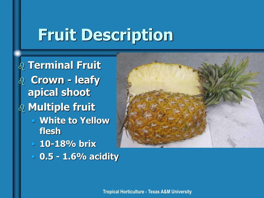 Fruit Description