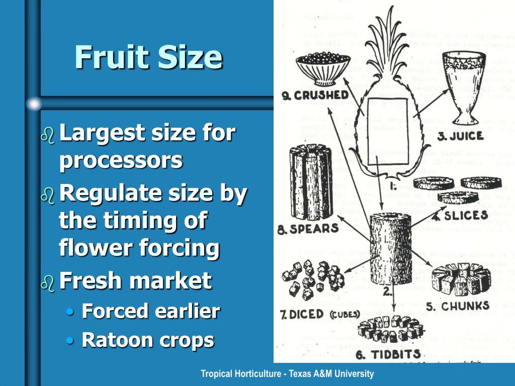 Fruit Size
