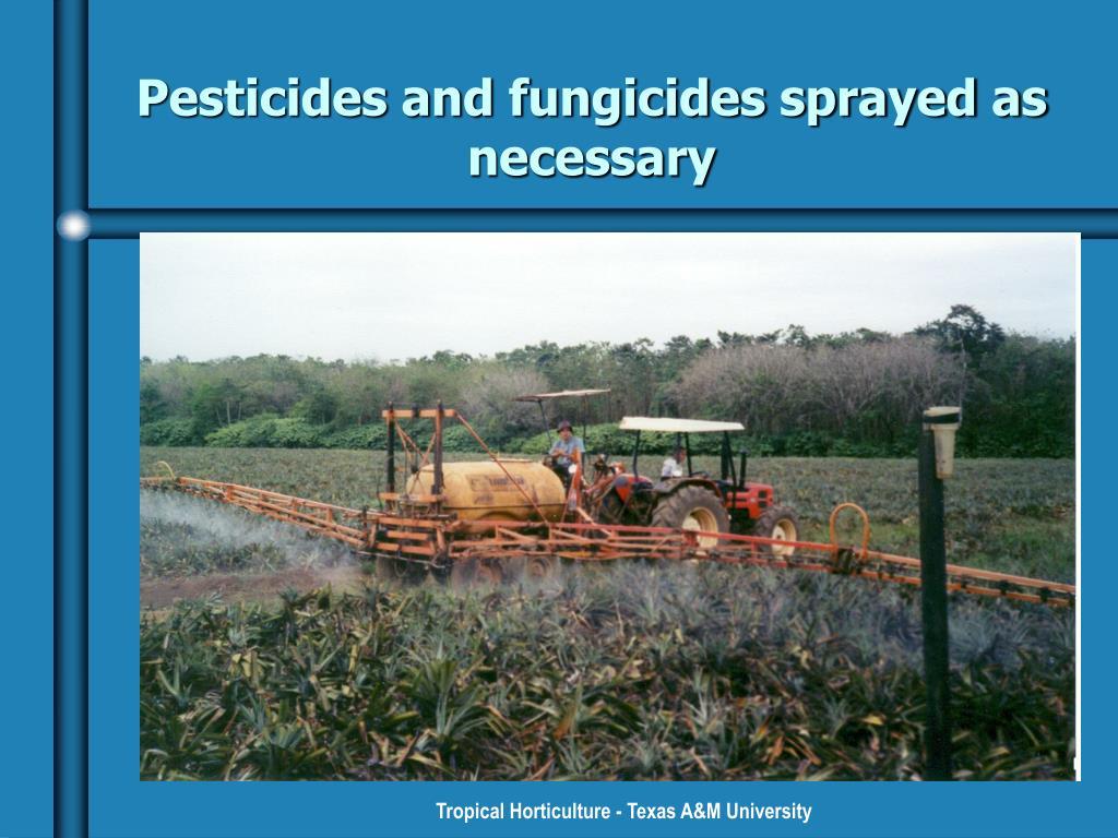 Pesticides and fungicides sprayed as necessary