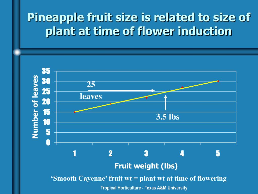 Pineapple fruit size is related to size of plant at time of flower induction