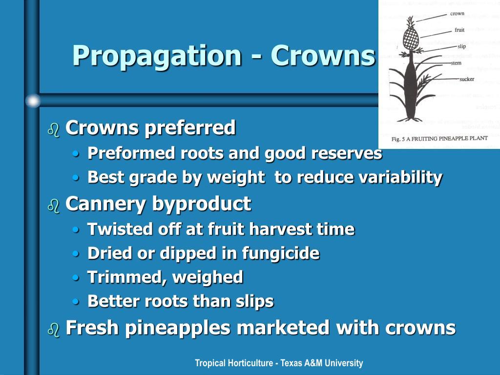 Propagation - Crowns