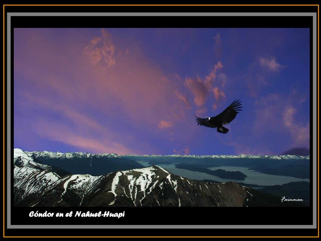 Cóndor en el Nahuel-Huapi
