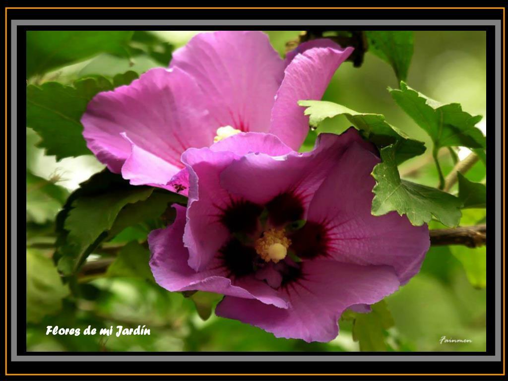 Flores de mi Jardín