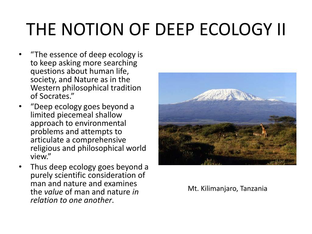 THE NOTION OF DEEP ECOLOGY II