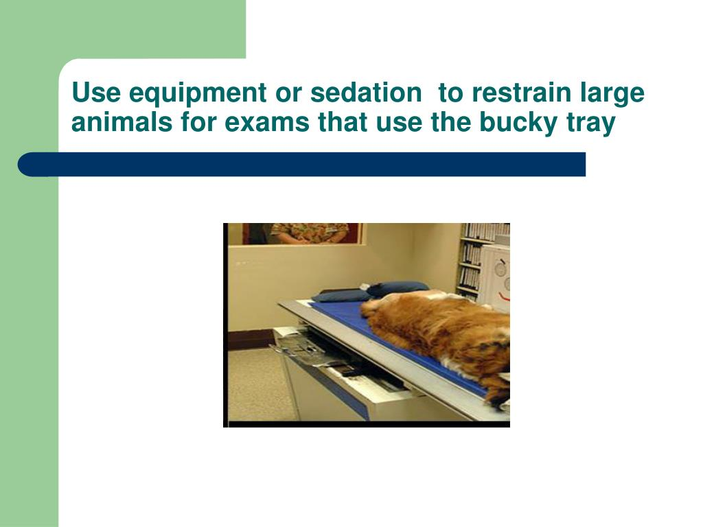 Use equipment or sedation  to restrain large animals for exams that use the bucky tray