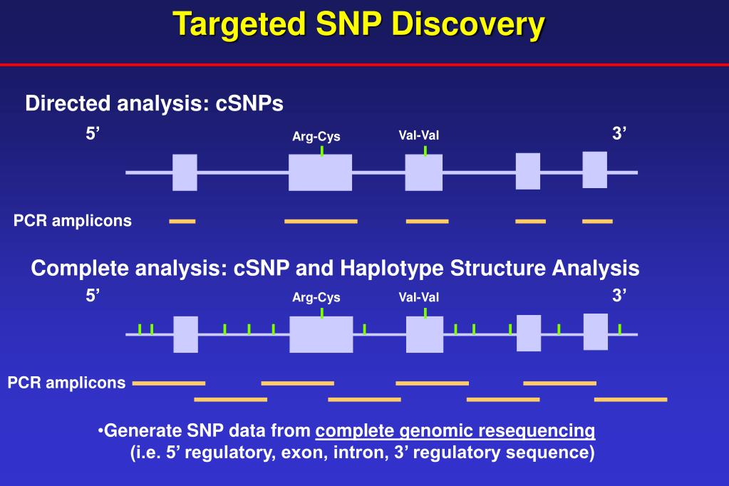Targeted SNP Discovery