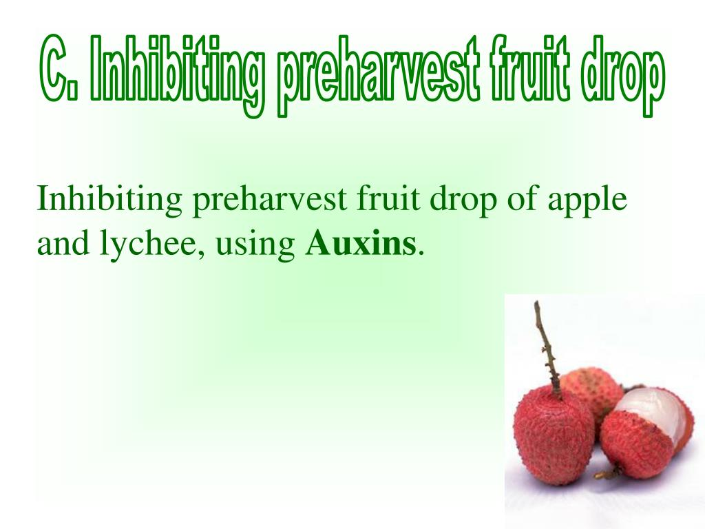 C. Inhibiting preharvest fruit drop