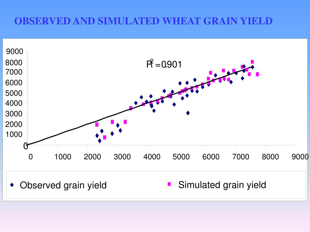 OBSERVED AND SIMULATED WHEAT GRAIN YIELD