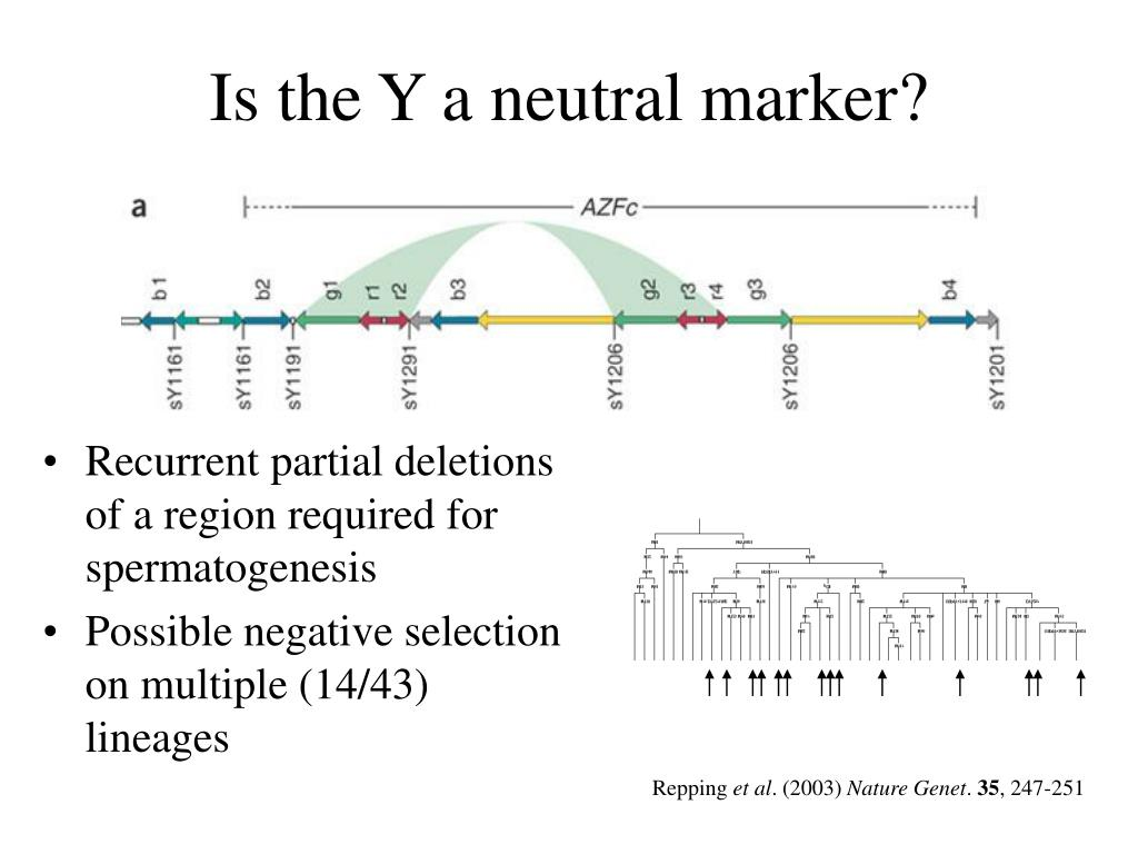 Is the Y a neutral marker?