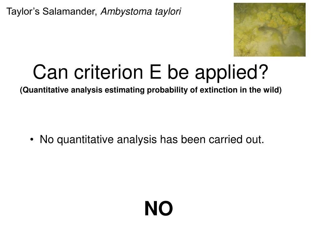 Taylor's Salamander,