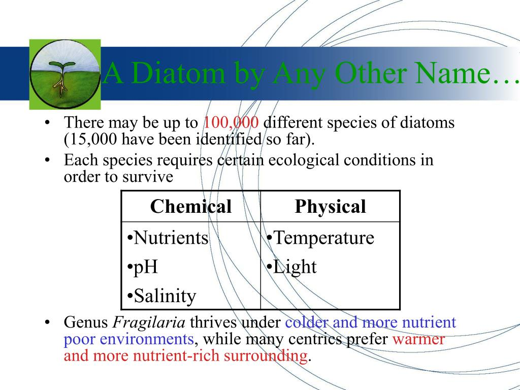 A Diatom by Any Other Name…