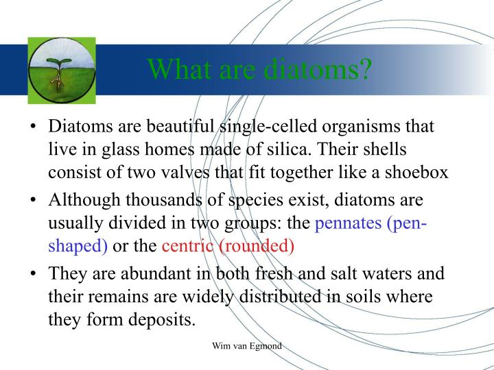 What are diatoms
