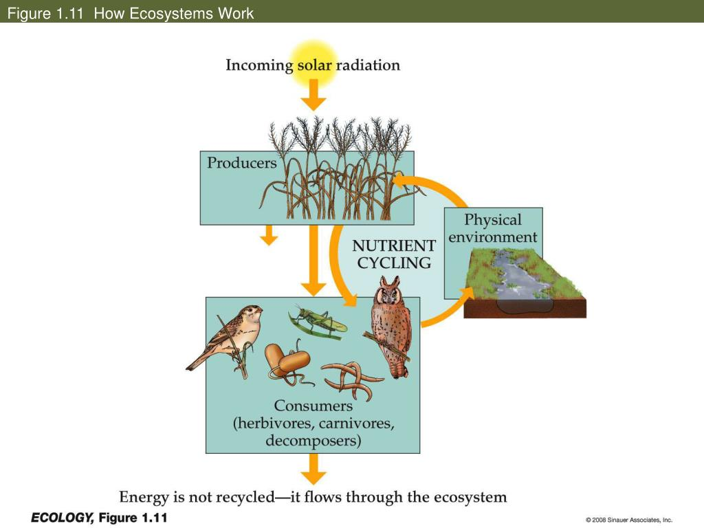 Figure 1.11  How Ecosystems Work