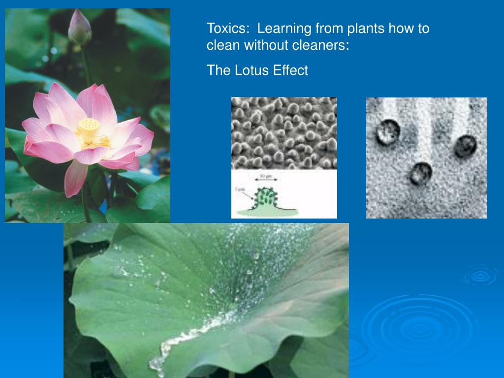 Toxics:  Learning from plants how to clean without cleaners: