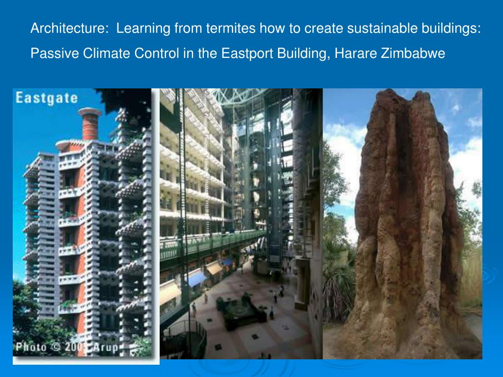 Architecture:  Learning from termites how to create sustainable buildings: