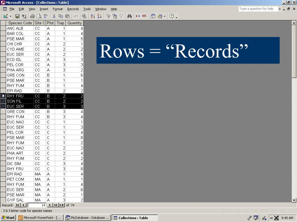 "Rows = ""Records"""