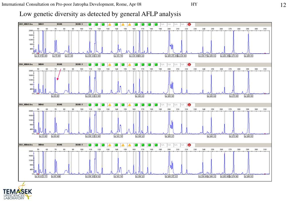 Low genetic diversity as detected by general AFLP analysis