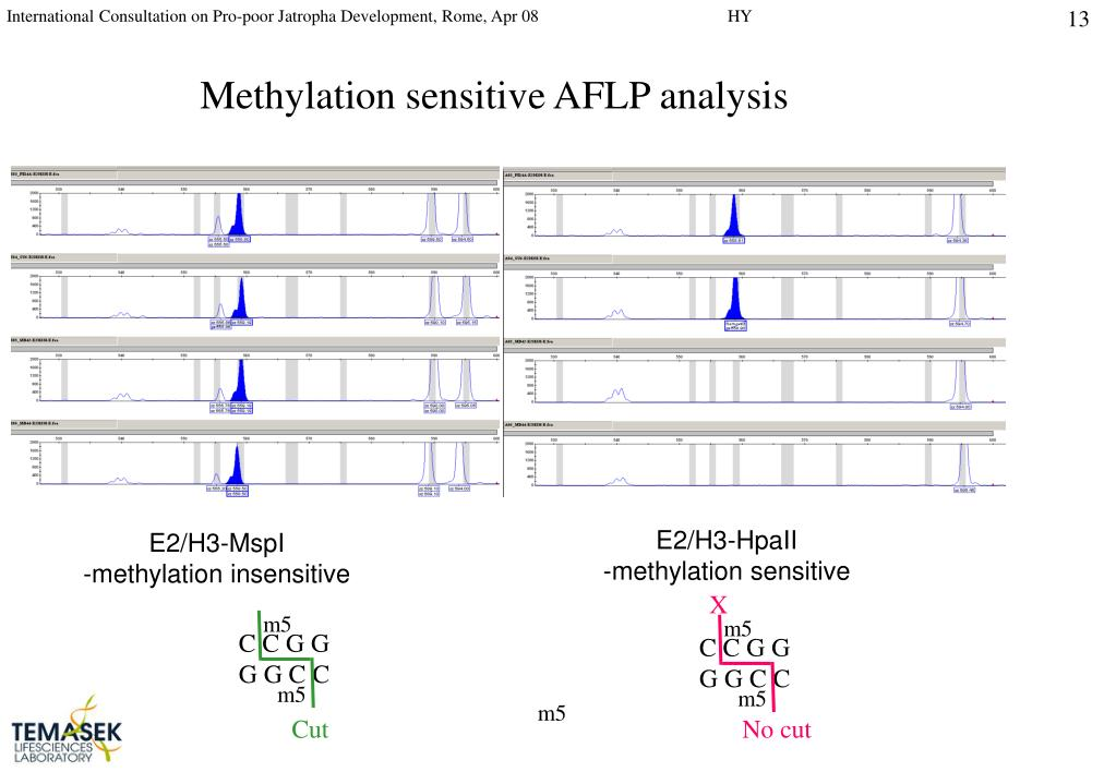 Methylation sensitive AFLP