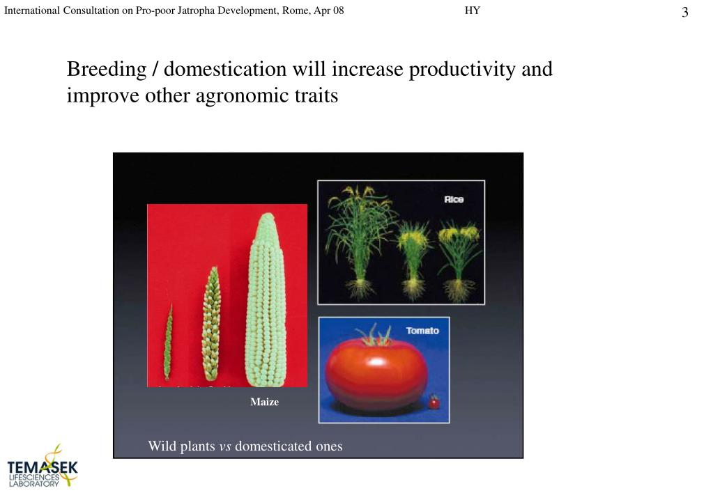 Breeding / domestication will increase productivity and