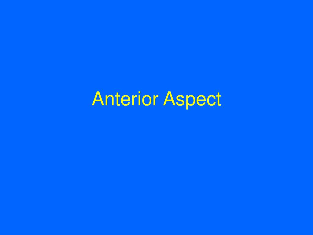 Anterior Aspect