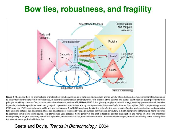 Bow ties, robustness, and fragility