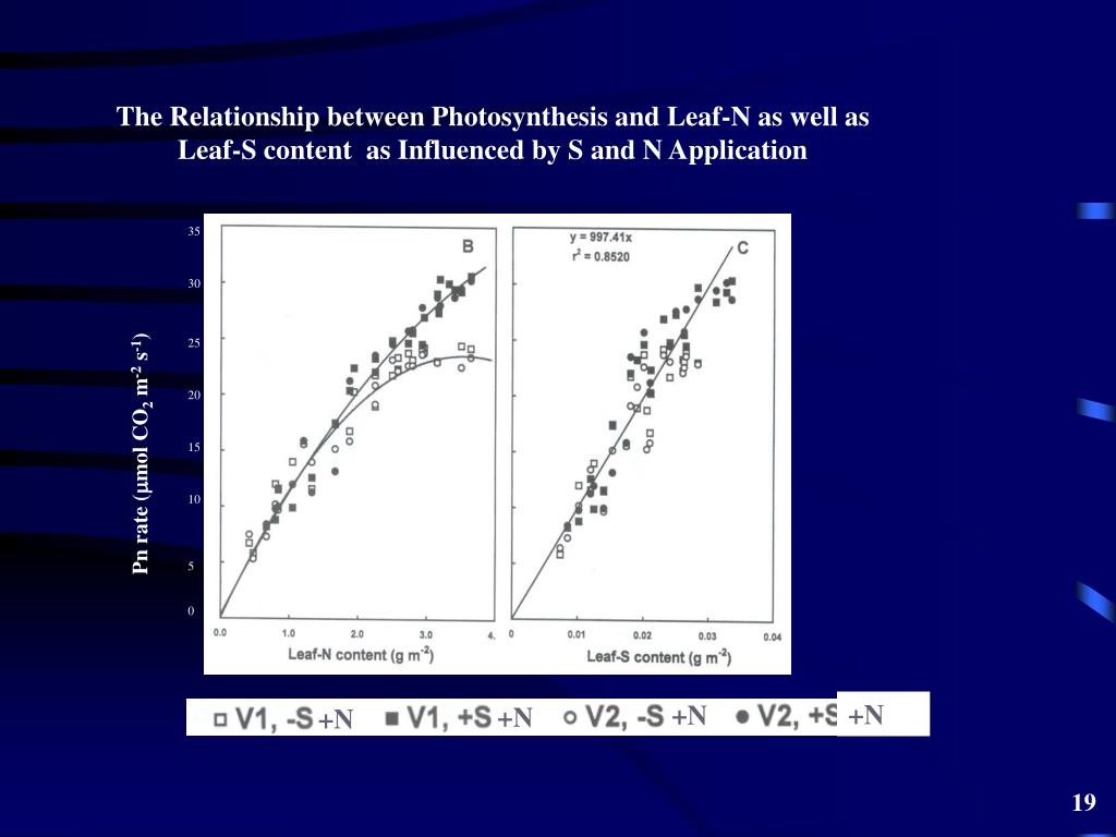 The Relationship between Photosynthesis and Leaf-N as well as Leaf-S content  as Influenced by S and N Application