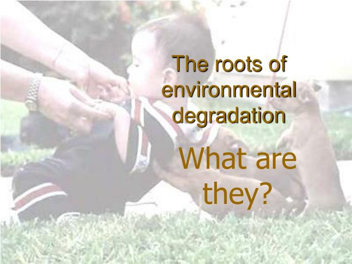 The roots of environmental degradation
